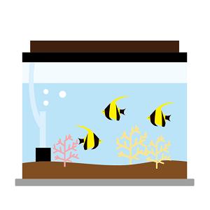 熱帯魚と水草